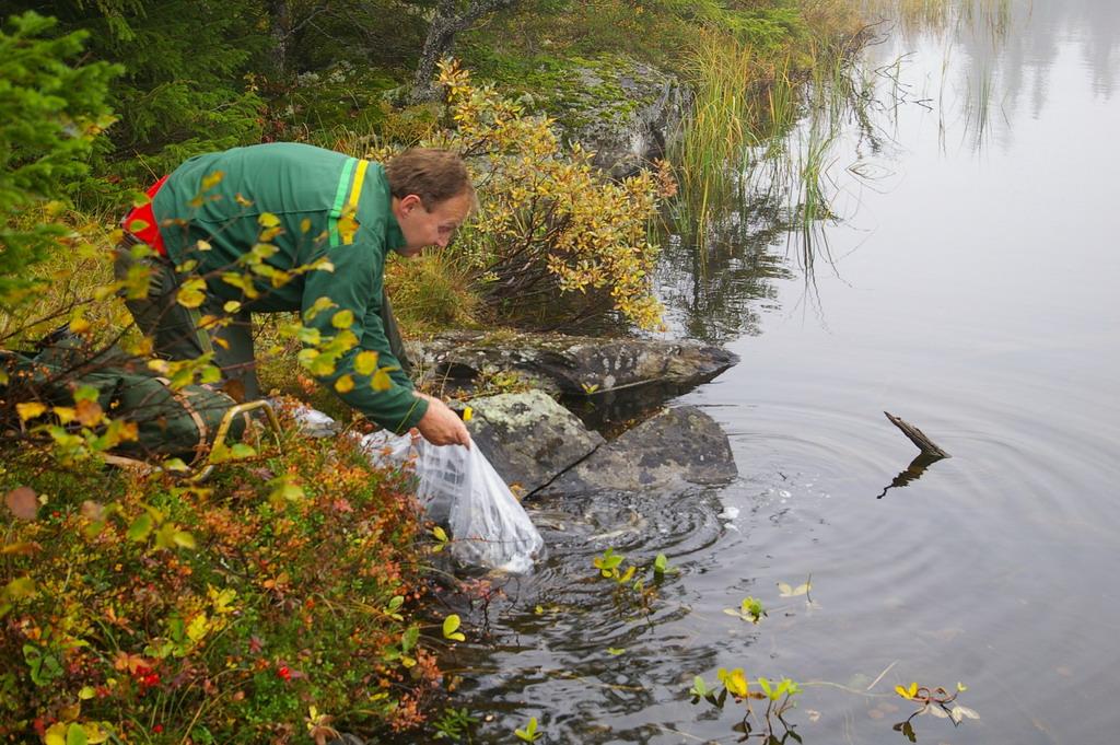 Utsetting av fisk pa Kroktjern